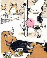 <b>Holstein Humor...</b>