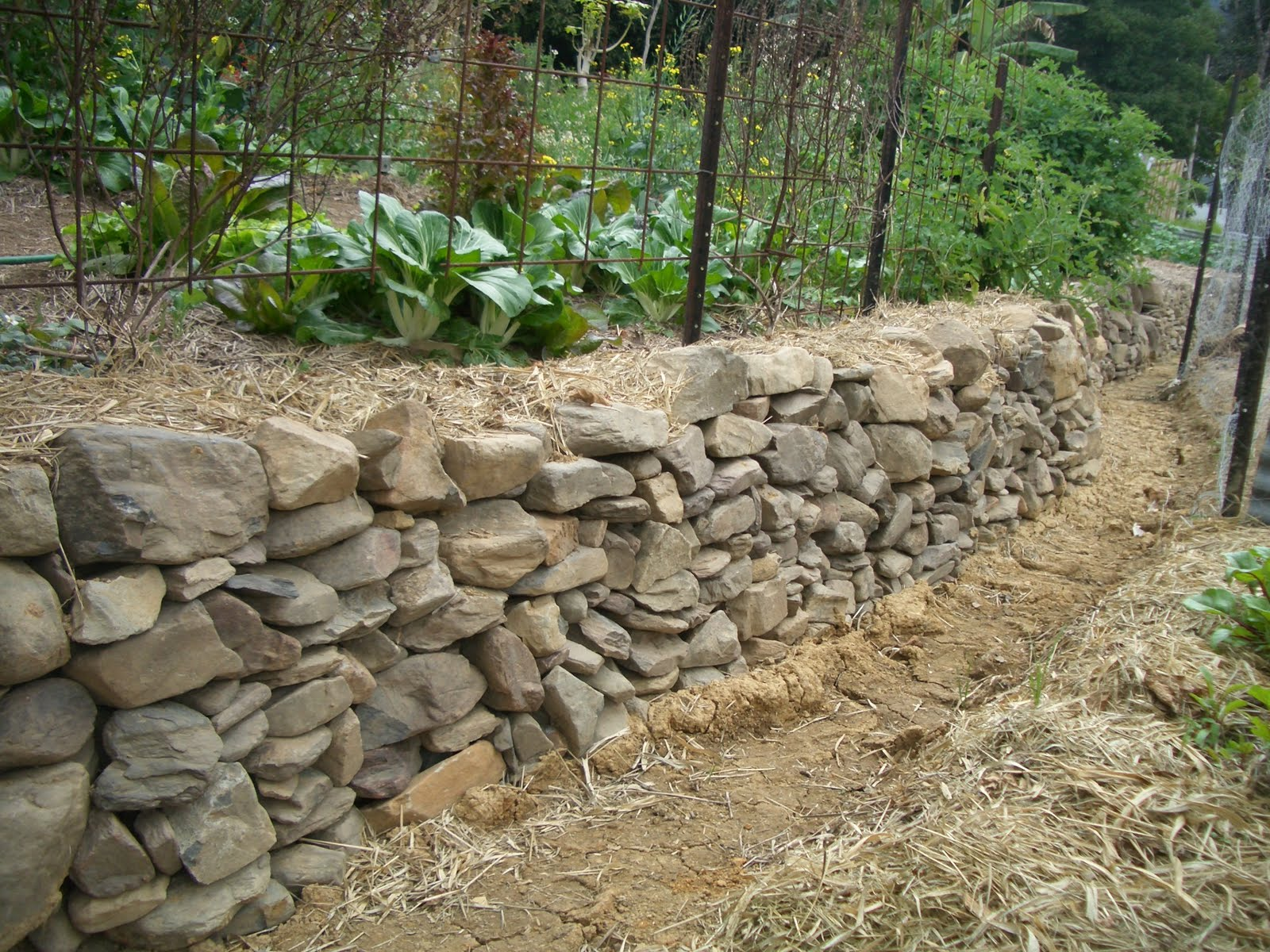 Permaculture demonstration site kin kin souls walls rock for Rock wall garden