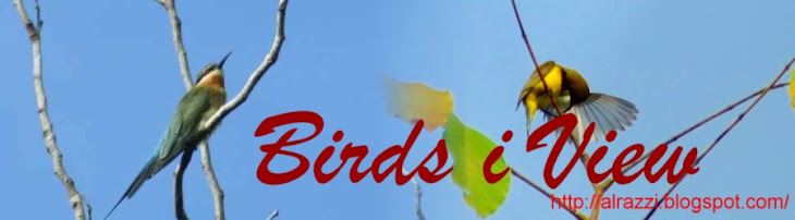 birds i view