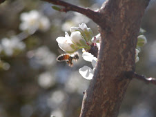 Return of the Pollinators