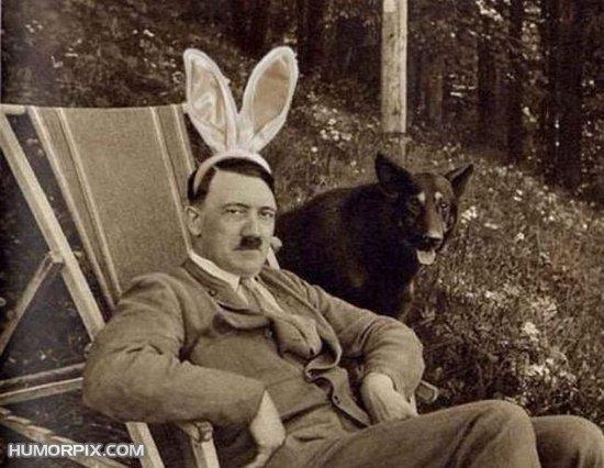 funny bunny. funny bunny. funny rabbit