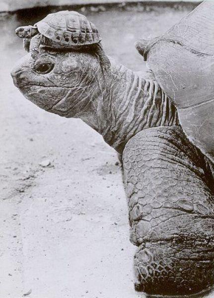 turtle-on-turtles-head