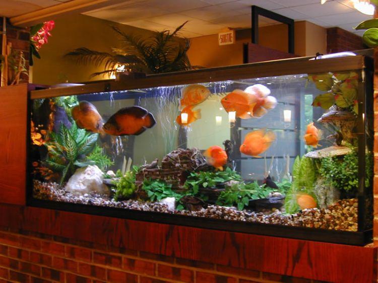 Como armar un acuario con peces de agua dulce taringa for Peces de pecera