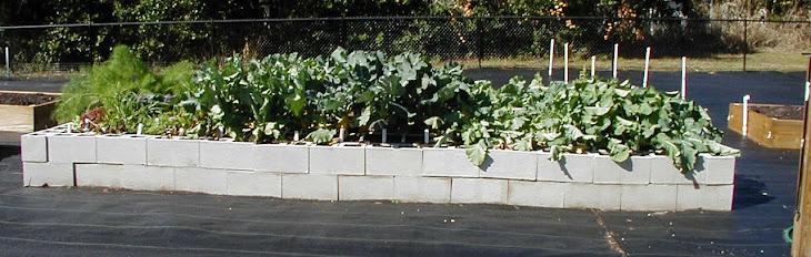 Community Gardens: Orange County, Florida