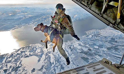 Austrian version of HALO insertion with dog