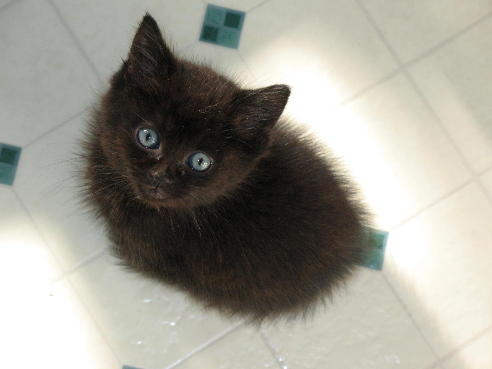 why do cats headbutt