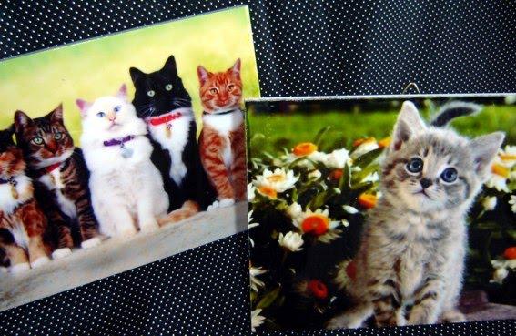 Reino gato ado o e rifinhas rifinha tito e cadelinha for Azulejo vitrificado
