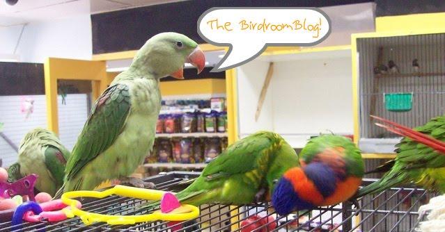 BirdroomBlog