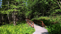 More of the Walkway to the Liard Hot Springs (see more pictures below)