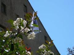 L'université Corse à Corté