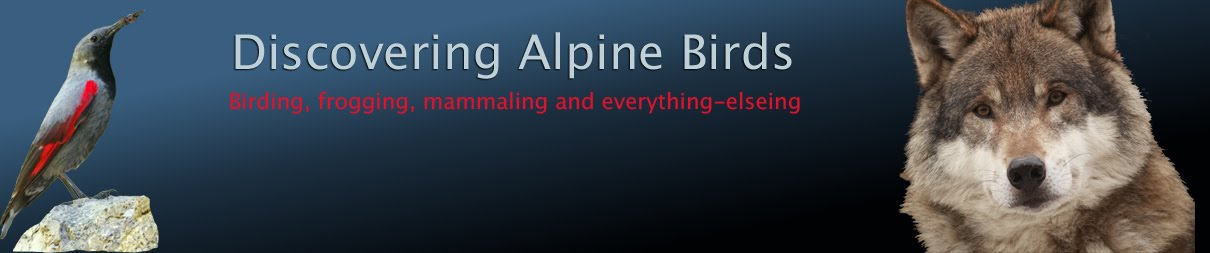 Discovering Alpine Birds