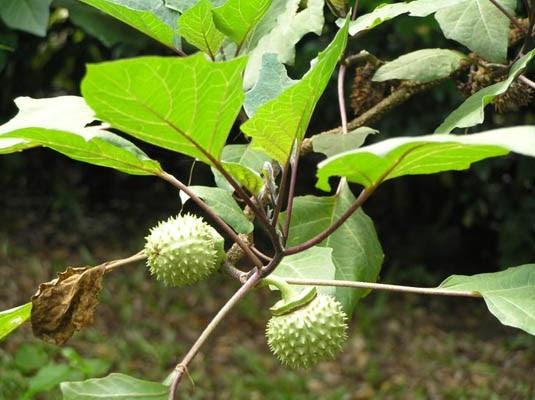 tempatku lepak com taman herba semulajadi dan dusun buah