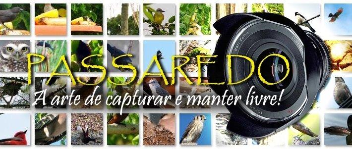 Passaredo Brasileiro - Pássaros Silvestres Brasileiros - Brazilian Wild Birds