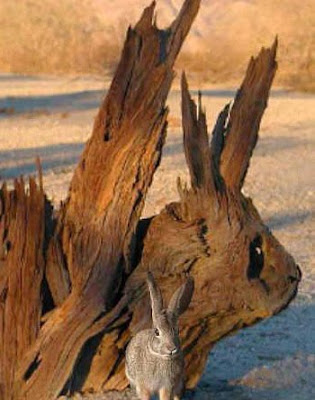 Hidden Rabbit Optical Illusion