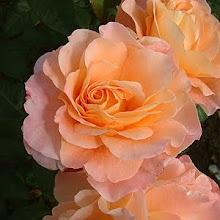 La rosa que lleva mi nombre