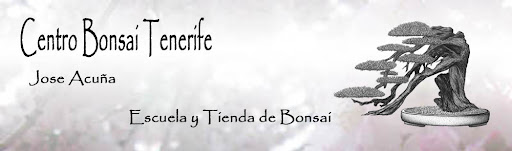 Centro Bonsai Tenerife