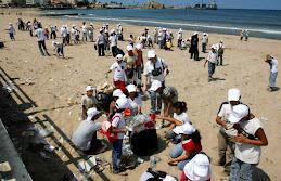 تنظيف الشاطىء في صيدا