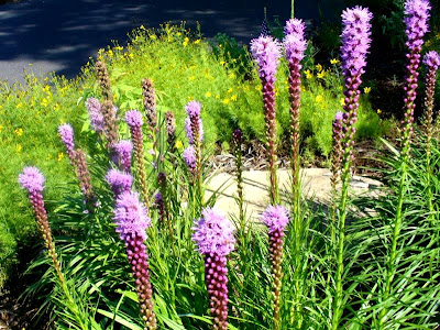 This is the roadside flowers