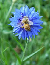 Ms. Worker Bee