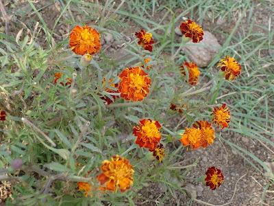 flowers at golconda