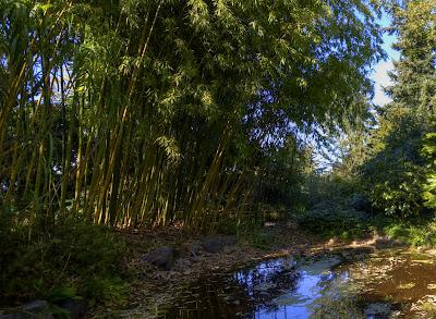 Finnerty Gardens, University of Victoria, Victoria, BC, Canada