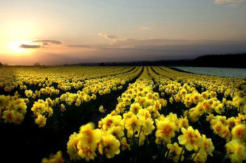 jardim rosas amarelas : jardim rosas amarelas:Além do Horizonte, Erasmo Carlos e Roberto Carlos.