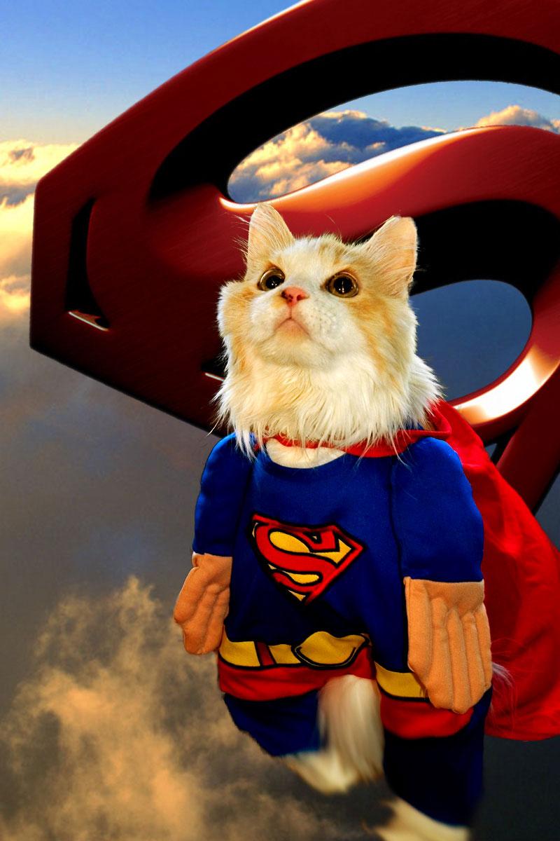 фотографии супер кота из мультика