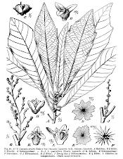 Lunasia Amara Blanco