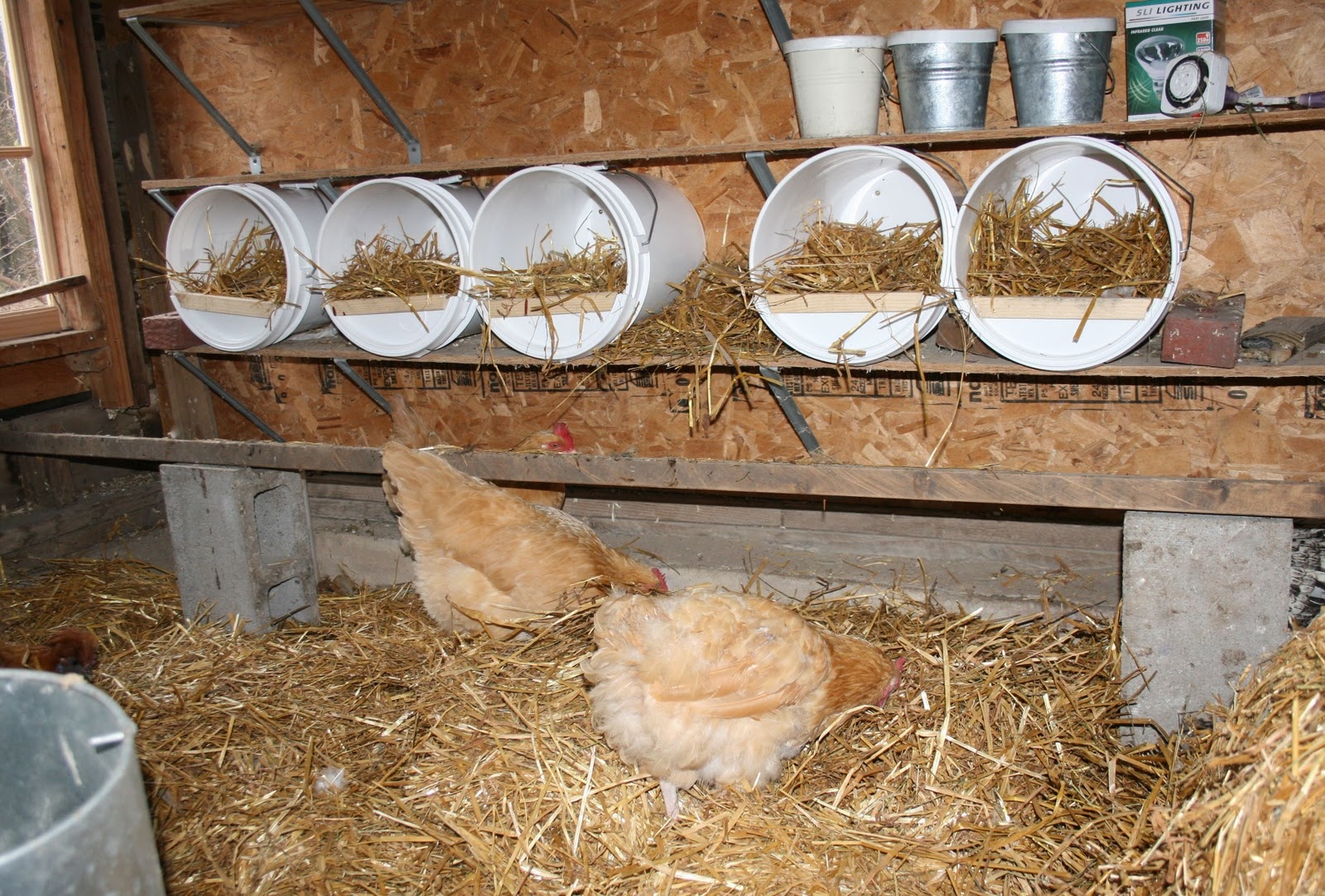 Chicken laying boxes - photo#18