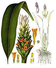 needed  to establish species of bacteria  and plant pathogenic fungi