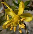 creosote bush ( Larrea tridentata)form a complex that functions downstream of ABI1 to control ABA-regulated expression of genes.