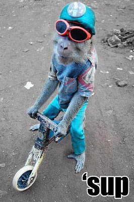 Cool_monkey.jpg