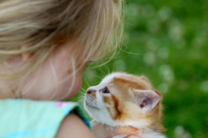 [Kitten+girl.jpg]