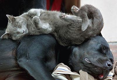 http://1.bp.blogspot.com/_gTJMEP-c2fo/SMG3-hAnrcI/AAAAAAAAEVk/FM-_w3cm5EU/s400/dog_bed.jpg
