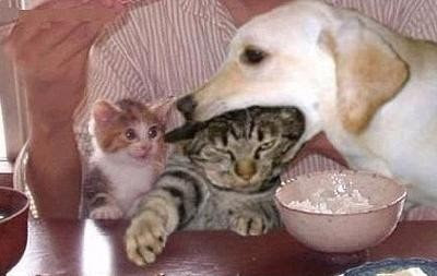 [Image: dog_eat_cat.jpg]