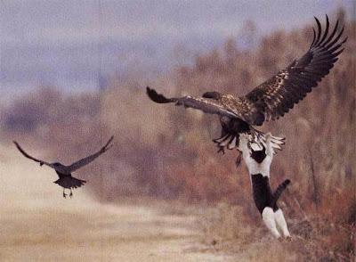 орел и котка