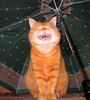 ��� ��� ���� ��� ���  2012 cat-says-cheese.jpg