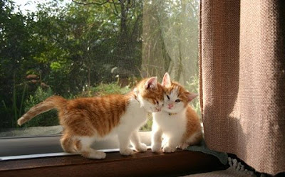 ��� ��� ���� ��� ���  2012 cute kitty 1.jpg