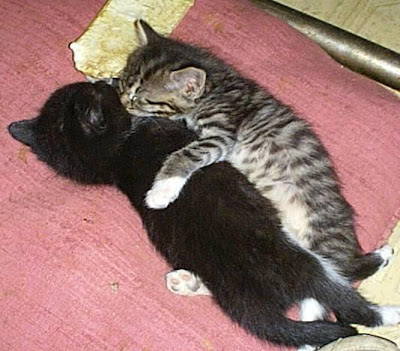 ��� ��� ���� ��� ���  2012 kitten love kiss.jpg