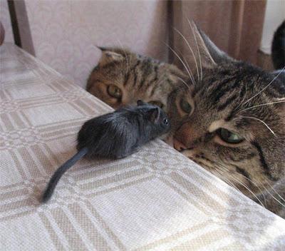 http://1.bp.blogspot.com/_gTJMEP-c2fo/SOx1WnboevI/AAAAAAAAGnY/D9RB3SBDxHw/s400/catnmouse.jpg