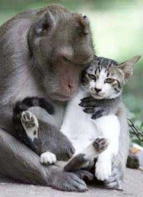 http://1.bp.blogspot.com/_gTJMEP-c2fo/STk_IYeUBtI/AAAAAAAAIco/q6uGUih_P_s/s400/cat+and+monkey+pic+6.jpg