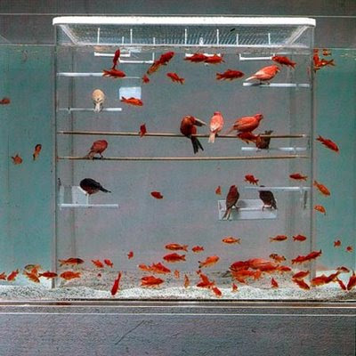 The Silverfish Aquarium designed by Octopus Studios is a gnarly looking  setup for your fishy little friends. Each 60 gallon setup is custom made,  ...
