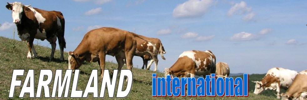 Import szarvasmarha