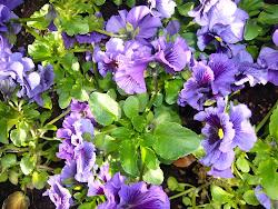 De krukkede blomster