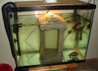 Как сделать аквариум своими руками в домашних для черепахи 28