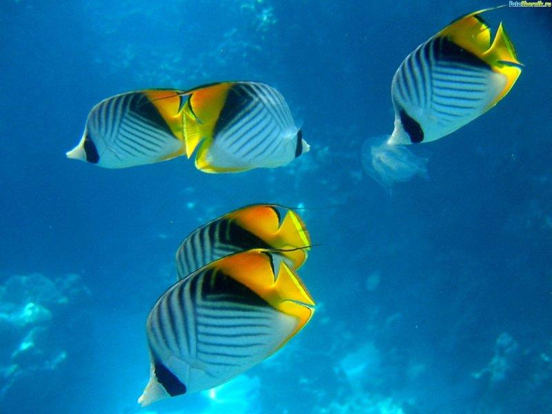 Морские обитатели.