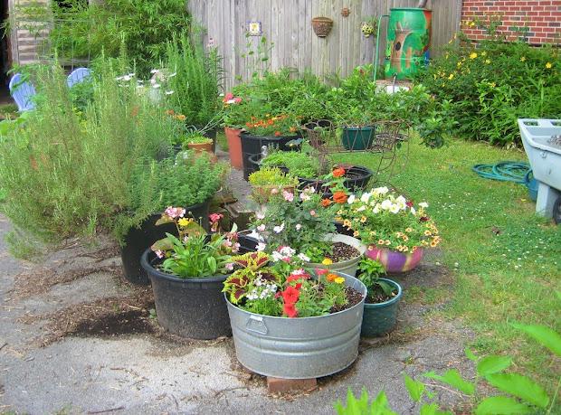 brangus lane container garden