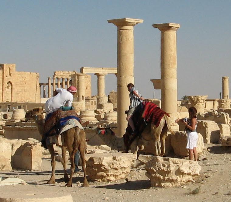 El camello II