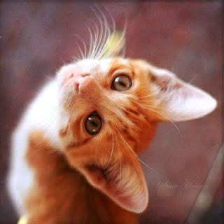 Komik hayvan resimleri 4 01 mb 55 jpeg up to 800x600 pix