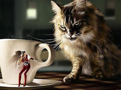 Top Ranking Funny Photos Collection